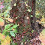 白神山地世界遺産ブナの森